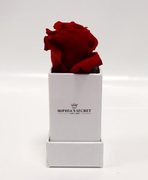 Rosenbox eckig Weiß Rosenfarbe rot L/B4,5H13cm