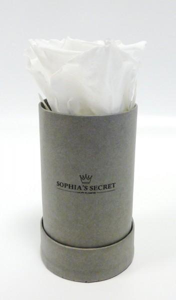 Rosenbox rund grau Rosenfarbe Weiß 5H13cm